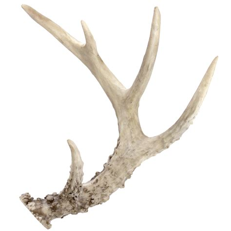 antler picture 1