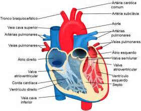 moor blood flow form pump pinis picture 3