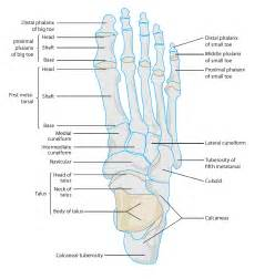 most common injuries to fifth metatarsal phalangeal joint picture 8