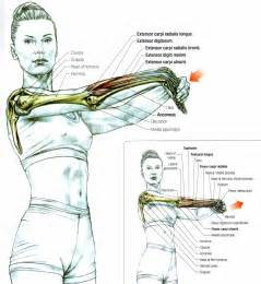 how to lengthen your muscle picture 2