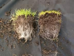 mycorrhizal fungi picture 11