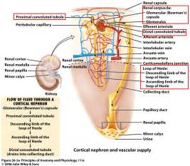 body fat used for energy bladder infection picture 11