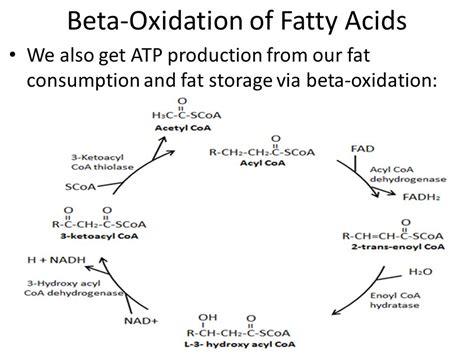 what is effect of redox fat picture 4