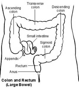 small intestine cause back pain picture 3