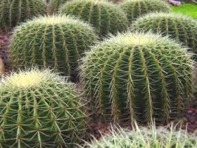 cactus picture 2