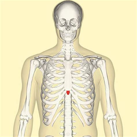 what dysfuncting organ can cause breast bone back picture 7