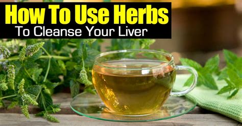 what herb cleanse your penis picture 14
