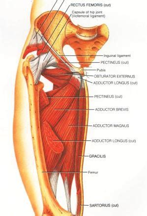 medial knee pain + joint space picture 5