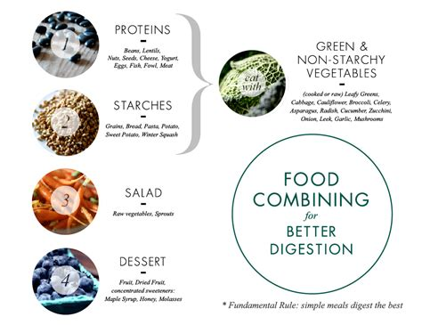 food digestion picture 7