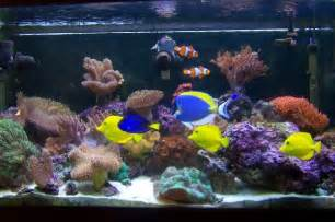 aquarium h picture 15