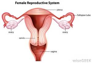 what causes low blood flow to uterus picture 7