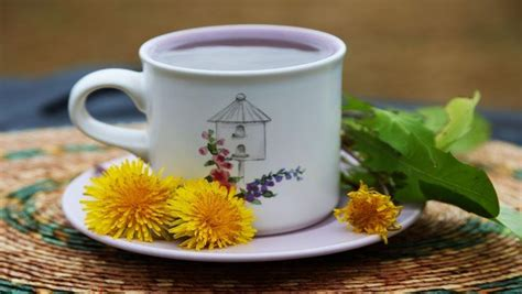 does dandelion tea reduce belly fat picture 1