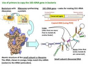 what is bacterial v picture 2
