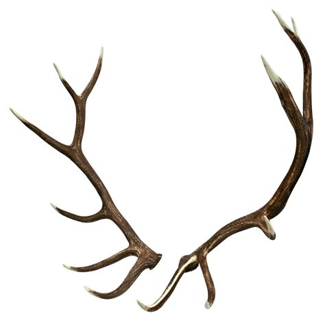 and antler pictures picture 3