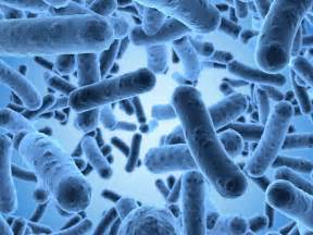 probiotics and colitis picture 15