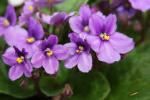 violet picture 1