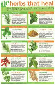 herbal plants price list pakistan picture 1