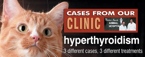 cat thyroid symptoms picture 15
