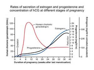 levels of hgh in early pregnancy picture 3