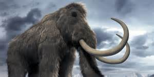 mammoth h picture 13