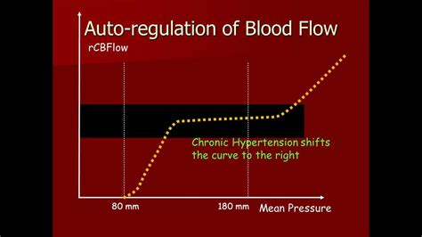 autoregulatory blood flow picture 15
