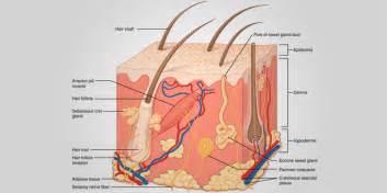 repivate cream benefits for skin conditions picture 6