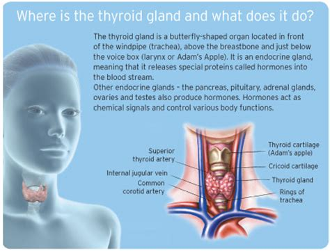 what does does thyroid medicine come picture 1