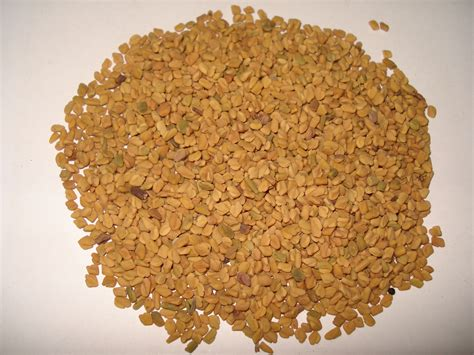 fenugreek seed picture 3