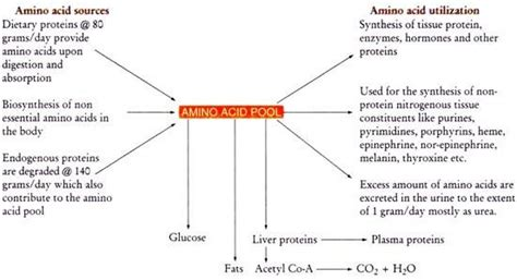 amino acids and proteins that build blood flow picture 8