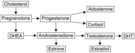 are estrogen and testosterone steroid hormones picture 3