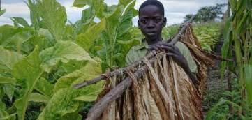 surari used to detox nicotine in kenya picture 13
