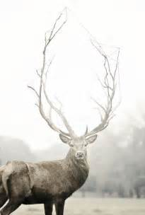 if i put deer anter , on my picture 6