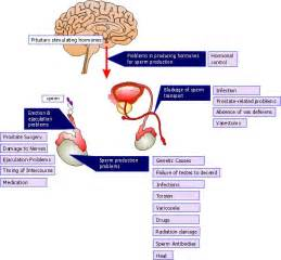 causes of almuranas in male picture 17