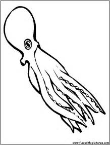 do squid have h picture 9