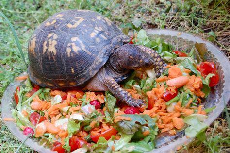 box turtles diet picture 3