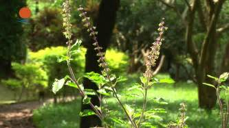 herbal plants to remove pekas picture 9