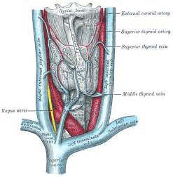 illustrations of thyroid surgery picture 1