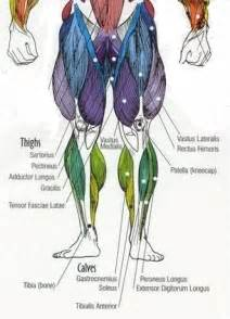 muscle in legs disease picture 9