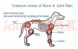 joint pain and dogs picture 5