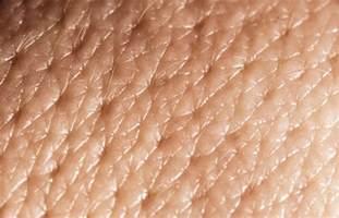 skin pores picture 1