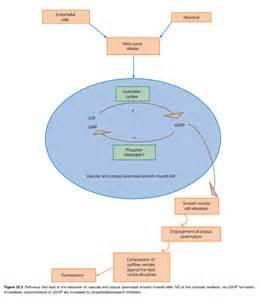 testosterone serum (total) picture 9