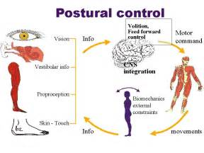 Changes in blood pressure due to postural changes picture 11