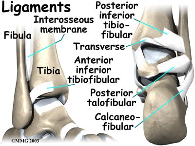 joint capsular sprain foot picture 10