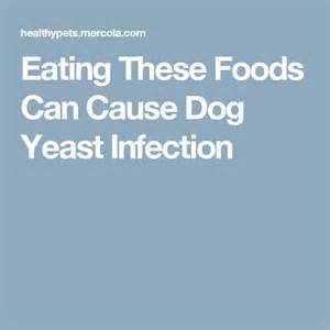 can zetia cause a yeast infection picture 2