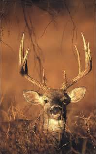s.w.a.t. deer antler picture 3