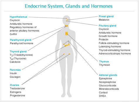 hormones picture 11