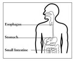 upper gastrointestinal exams picture 13