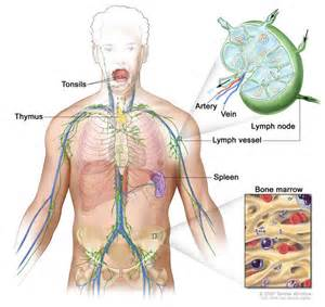 enlarged liver,spleen,lymphnodes and fever picture 11