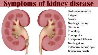 kidney problem symptoms in dachshunds picture 2