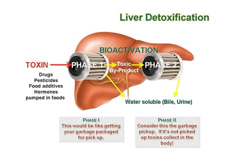 are there prescribed drugs known to increase liver picture 5